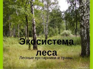 Экосистема леса Лесные кустарники и травы.