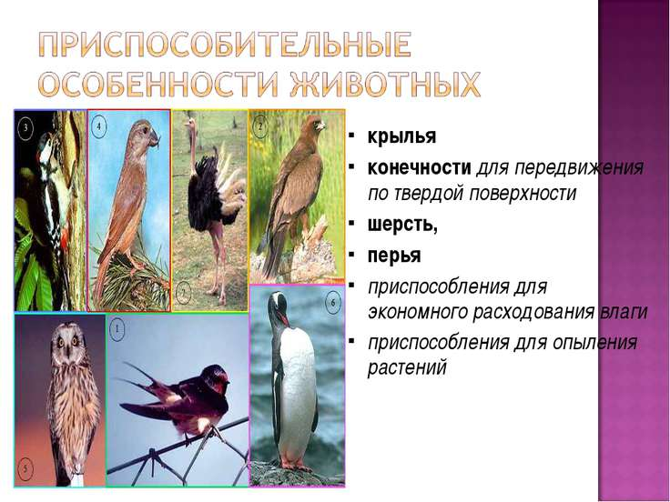 крылья конечности для передвижения по твердой поверхности шерсть, перья присп...