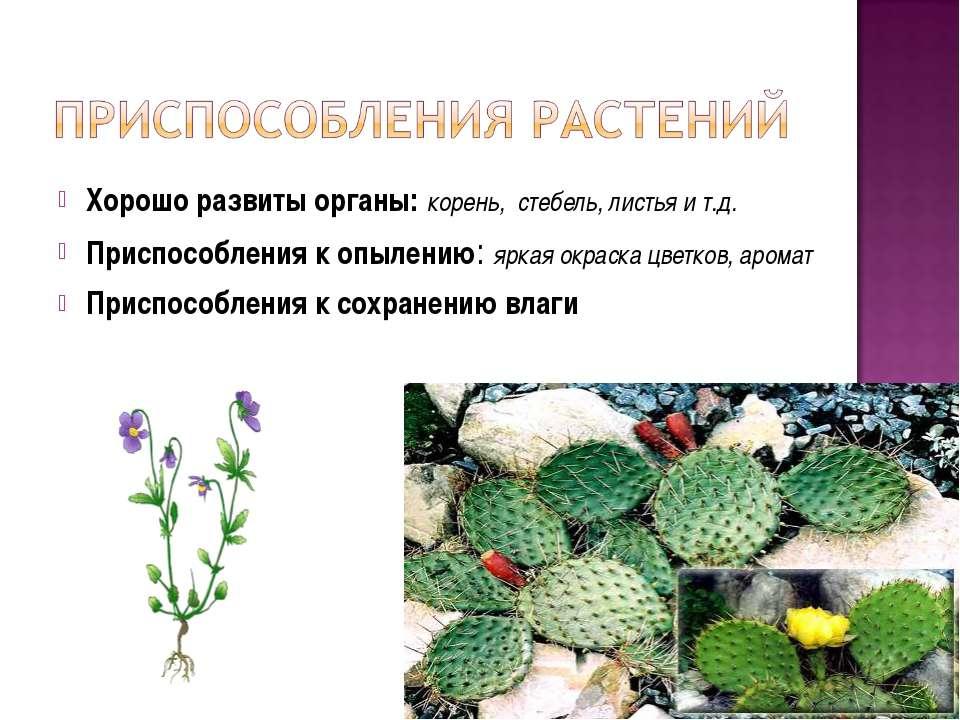 Хорошо развиты органы: корень, стебель, листья и т.д. Приспособления к опылен...