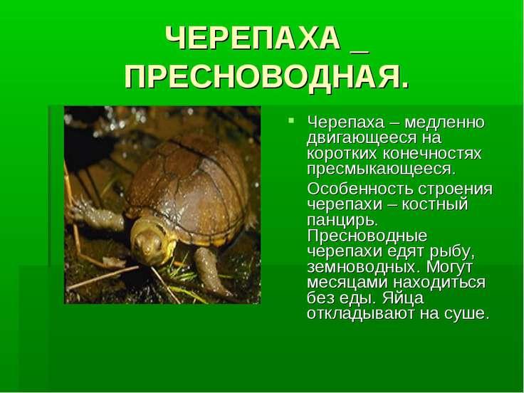 ЧЕРЕПАХА _ ПРЕСНОВОДНАЯ. Черепаха – медленно двигающееся на коротких конечнос...