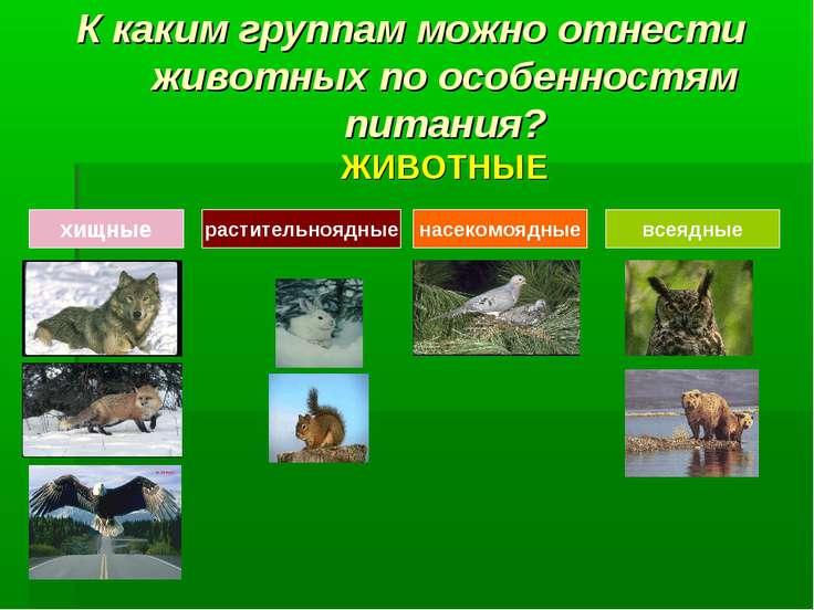 К каким группам можно отнести животных по особенностям питания? ЖИВОТНЫЕ хищн...