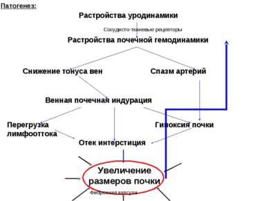 Патогенез: Растройства уродинамики Растройства почечной гемодинамики Снижение...