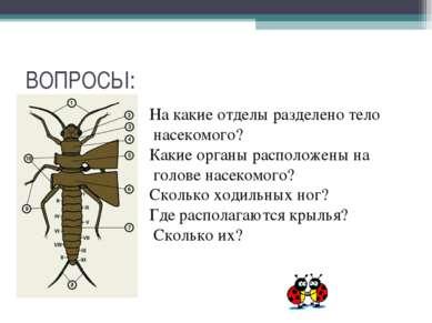 ВОПРОСЫ: На какие отделы разделено тело насекомого? Какие органы расположены ...