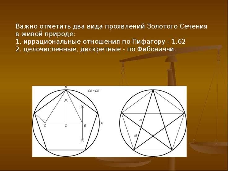 Важно отметить два вида проявлений Золотого Сечения в живой природе: 1. иррац...