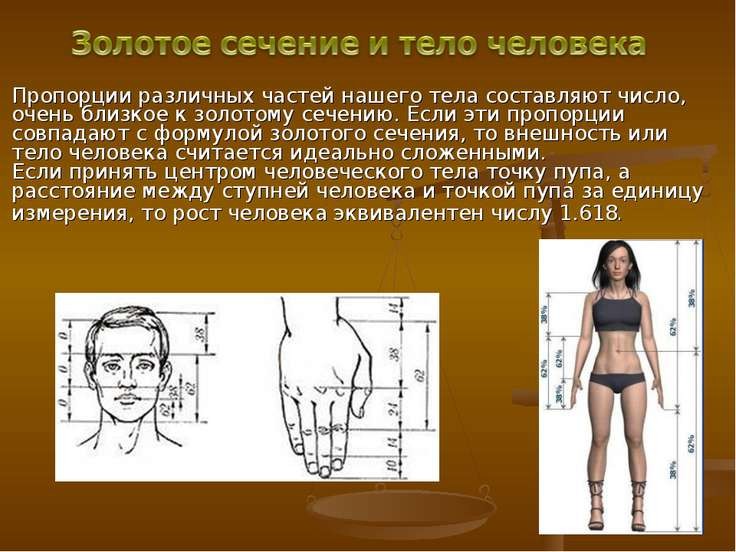 Пропорции различных частей нашего тела составляют число, очень близкое к золо...