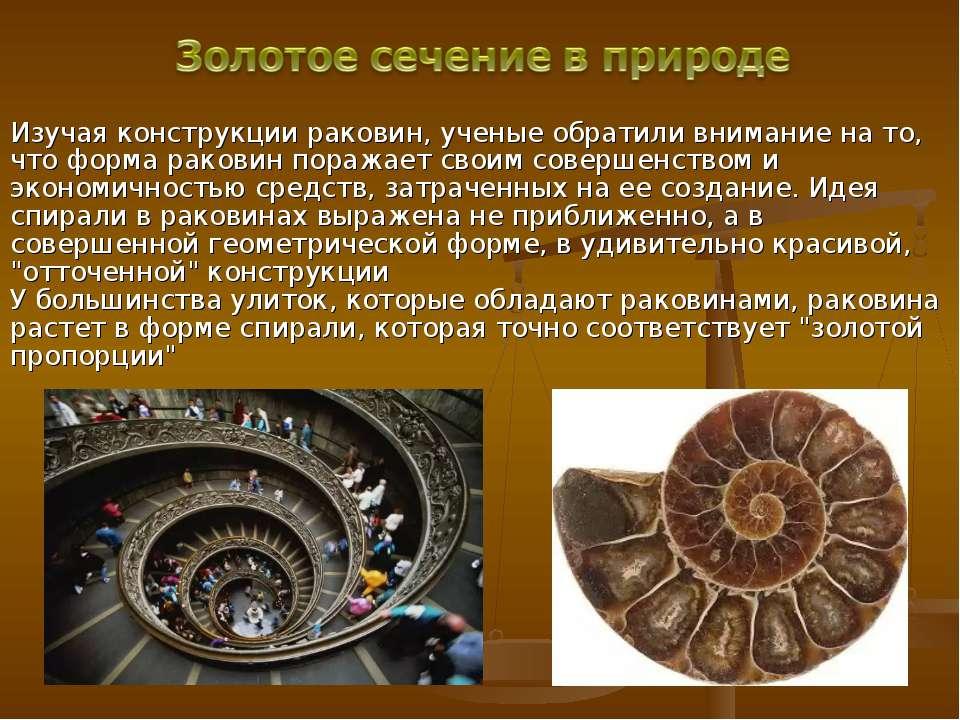 Изучая конструкции раковин, ученые обратили внимание на то, что форма раковин...