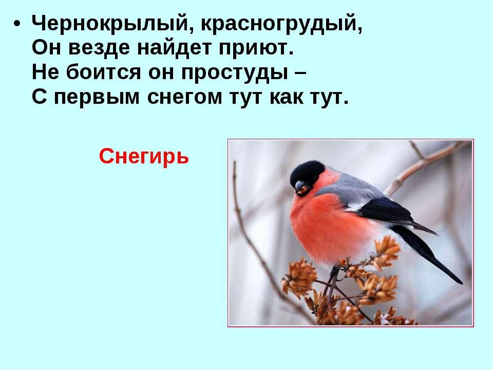 Чернокрылый, красногрудый, Он везде найдет приют. Не боится он простуды – С п...