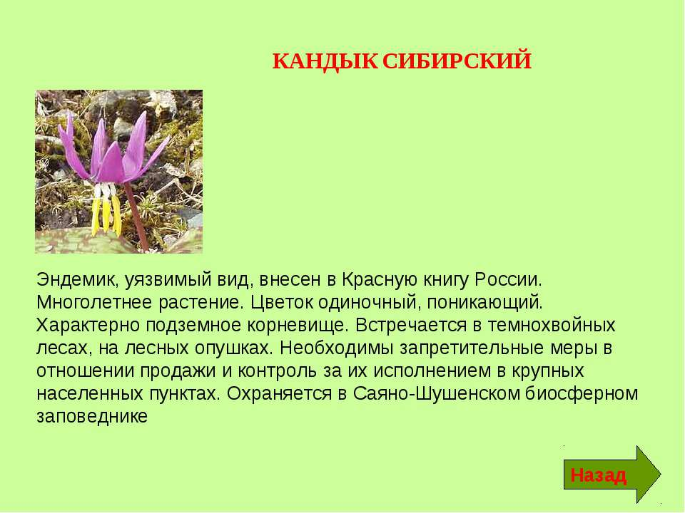 эндемики россии животные и растения локации больницы