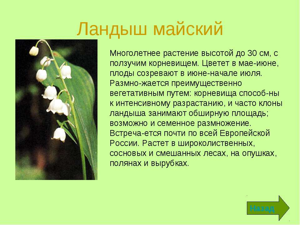 Ландыш майский Назад Многолетнее растение высотой до 30 см, с ползучим корнев...