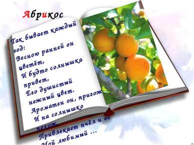Абрикос Так бывает каждый год: Весною ранней он цветёт, И будто солнышка прив...
