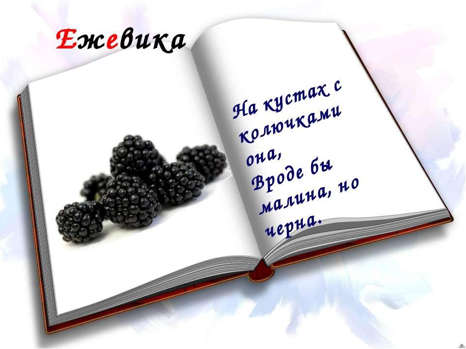 Ежевика На кустах с колючками она, Вроде бы малина, но черна.