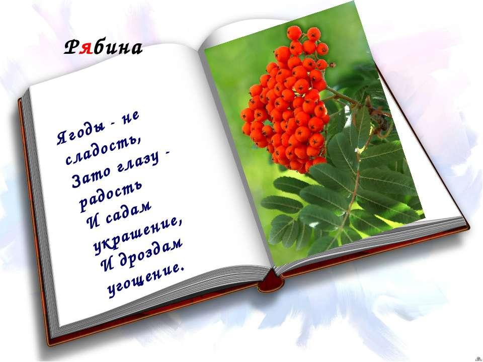Рябина Ягоды - не сладость, Зато глазу - радость И садам украшение, И дроздам...