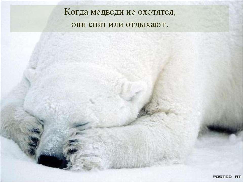 Когда медведи не охотятся, они спят или отдыхают.