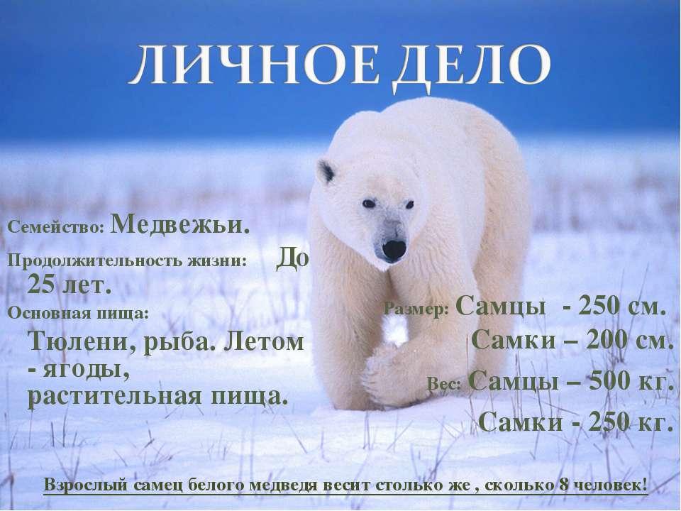 Семейство: Медвежьи. Продолжительность жизни: До 25 лет. Основная пища: Тюлен...