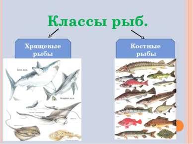 Классы рыб. Хрящевые рыбы Костные рыбы
