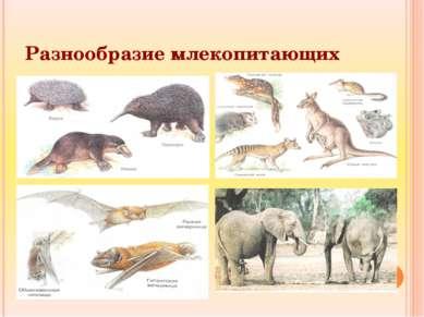 Разнообразие млекопитающих
