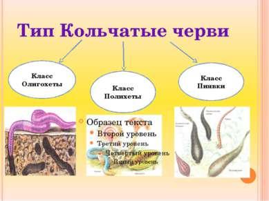 Тип Кольчатые черви Класс Олигохеты Класс Полихеты Класс Пиявки