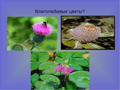 Влаголюбивые цветы?