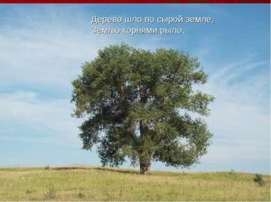 Дерево шло по сырой земле, Землю корнями рыло,