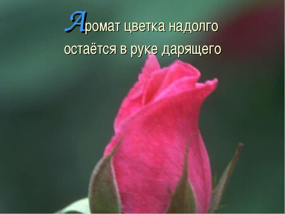 Аромат цветка надолго остаётся в руке дарящего