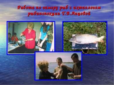 Работа по замеру рыб с ихтиологом рыбинспекции Т.В.Лицовой