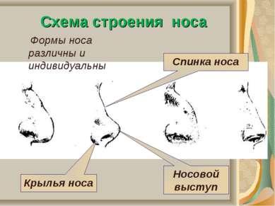 Схема строения носа Крылья носа Носовой выступ Спинка носа Формы носа различн...
