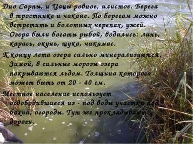 Дно Сарпы, и Цацы ровное, илистое. Берега в тростнике и чакане. По берегам мо...