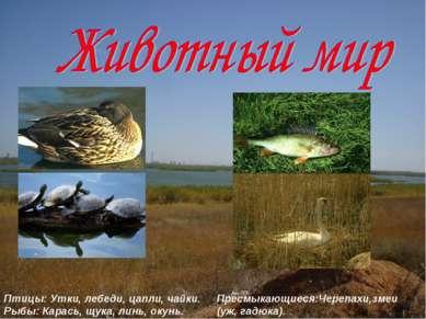 Птицы: Утки, лебеди, цапли, чайки. Рыбы: Карась, щука, линь, окунь. Пресмыкаю...