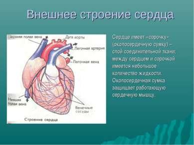Внешнее строение сердца Сердце имеет «сорочку» (околосердечную сумку) – слой ...