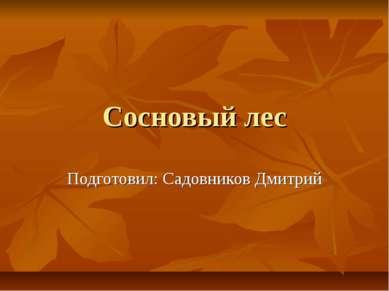 Сосновый лес Подготовил: Садовников Дмитрий