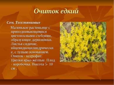 Очиток едкий Сем. Толстянковые Маленькое растеньице с приподнимающимися цвето...