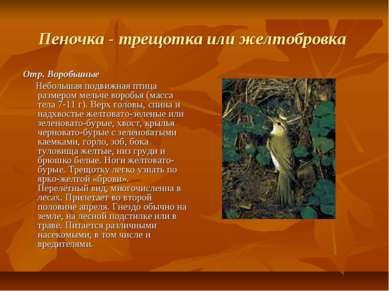 Пеночка - трещотка или желтобровка Отр. Воробьиные Небольшая подвижная птица ...