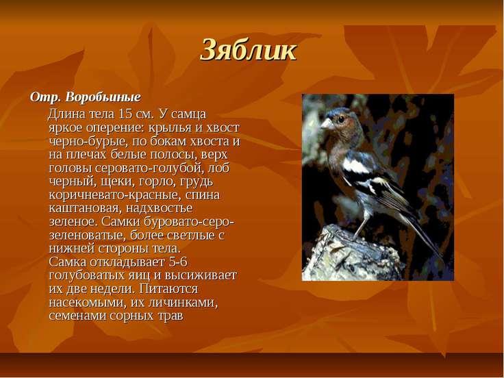 Зяблик Отр. Воробьиные Длина тела 15 см. У самца яркое оперение: крылья и хво...