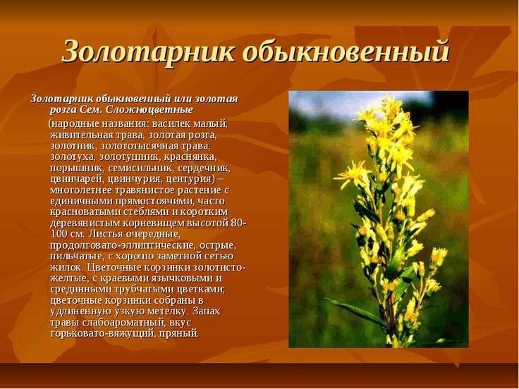 Золотарник обыкновенный Золотарник обыкновенный или золотая розга Сем. Сложно...