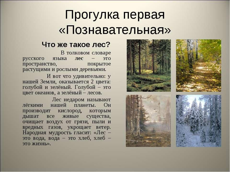 Прогулка первая «Познавательная» Что же такое лес? В толковом словаре русског...