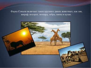 Фауна Сомали включает таких крупных диких животных, как лев, жираф, носорог, ...