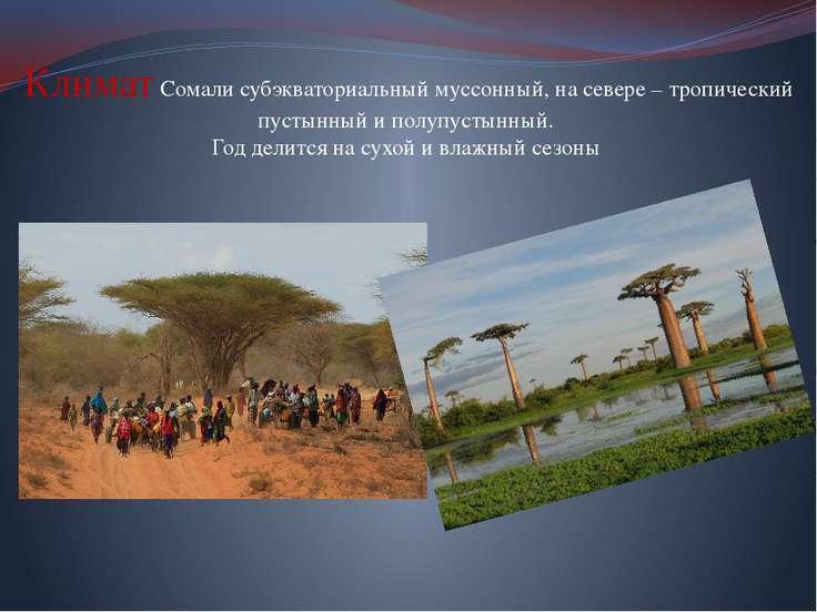Климат Сомали субэкваториальный муссонный, на севере – тропический пустынный ...