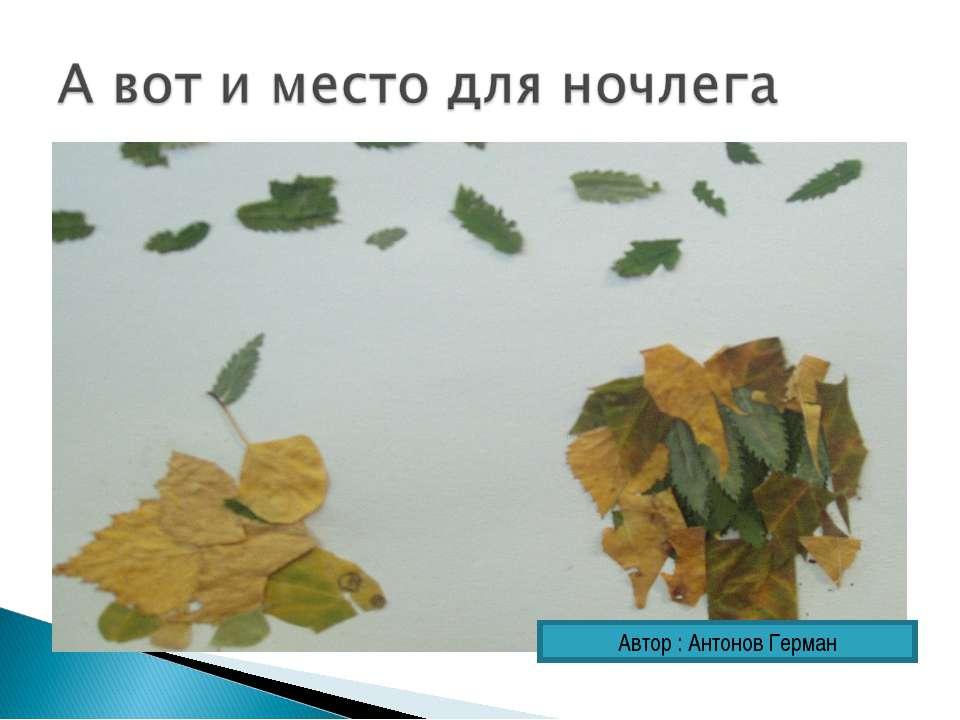 Автор : Антонов Герман