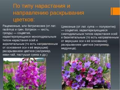 По типу нарастания и направлению раскрывания цветков: Рацемозные, или ботриче...