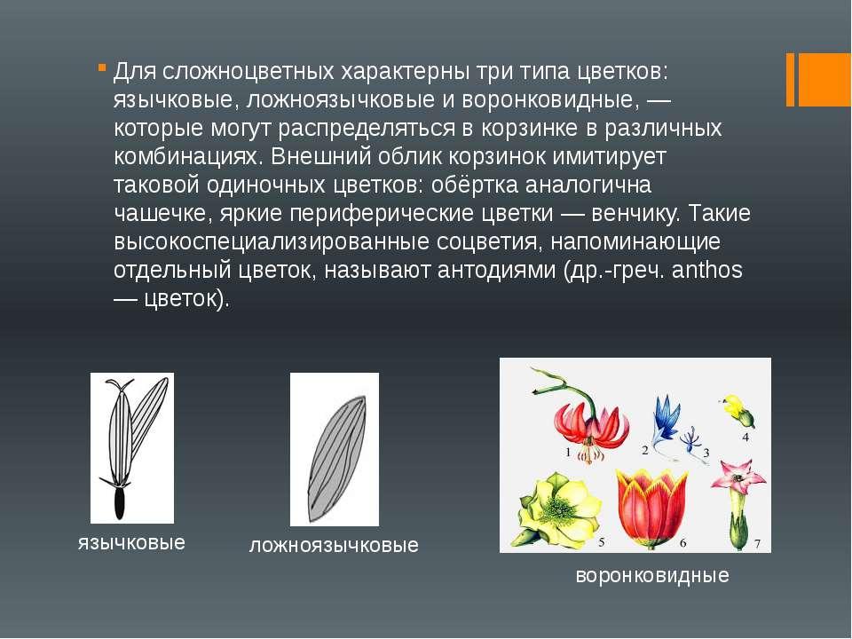 Для сложноцветных характерны три типа цветков: язычковые, ложноязычковые и во...