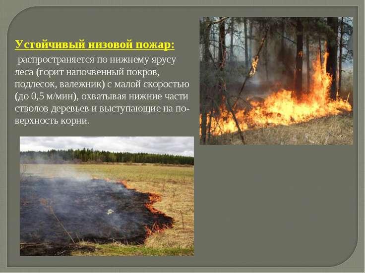 . Устойчивый низовой пожар: распространяется по нижнему ярусу леса (горит нап...