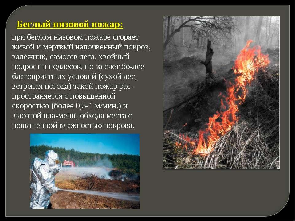 Беглый низовой пожар: при беглом низовом пожаре сгорает живой и мертвый напоч...
