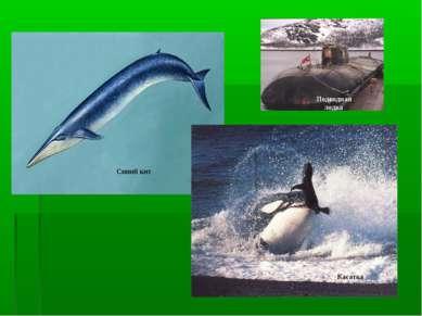 Синий кит Касатка Подводная лодка