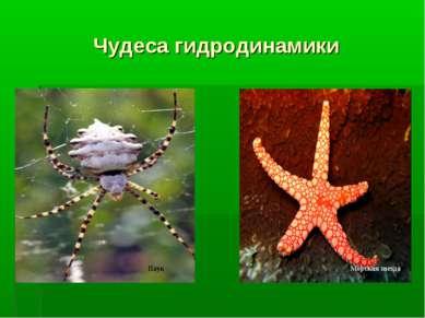 Чудеса гидродинамики Паук Морская звезда