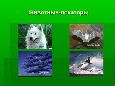 Животные-локаторы Собака Дельфины Летучая мышь Касатка
