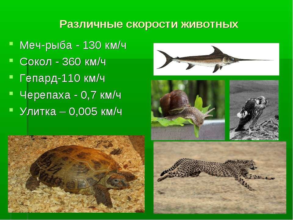 Различные скорости животных Меч-рыба - 130 км/ч Сокол - 360 км/ч Гепард-110 к...
