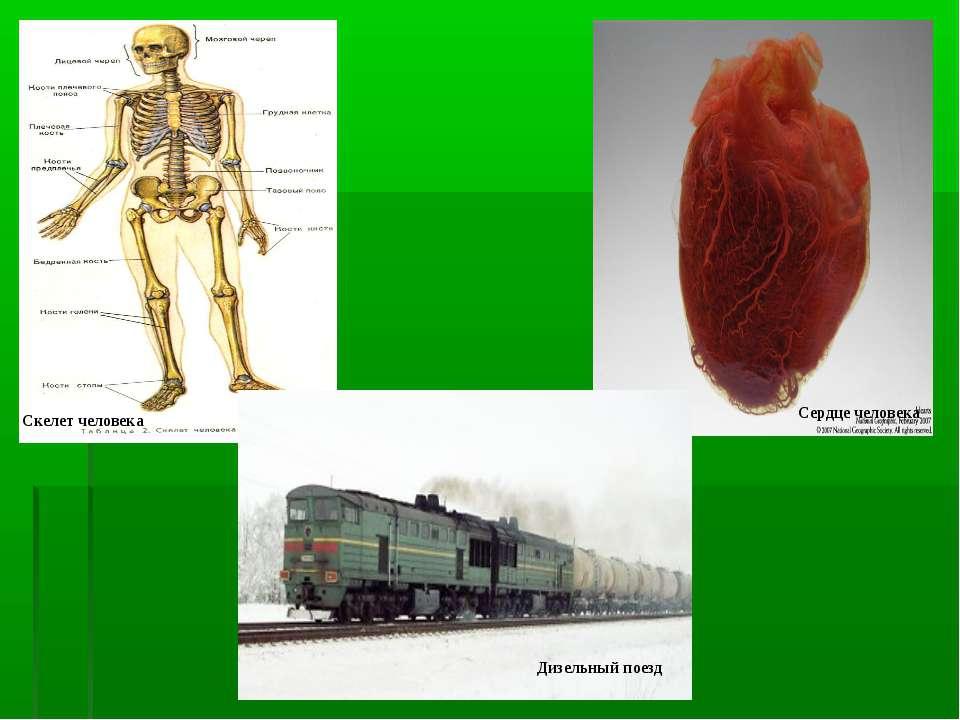 Скелет человека Сердце человека Дизельный поезд