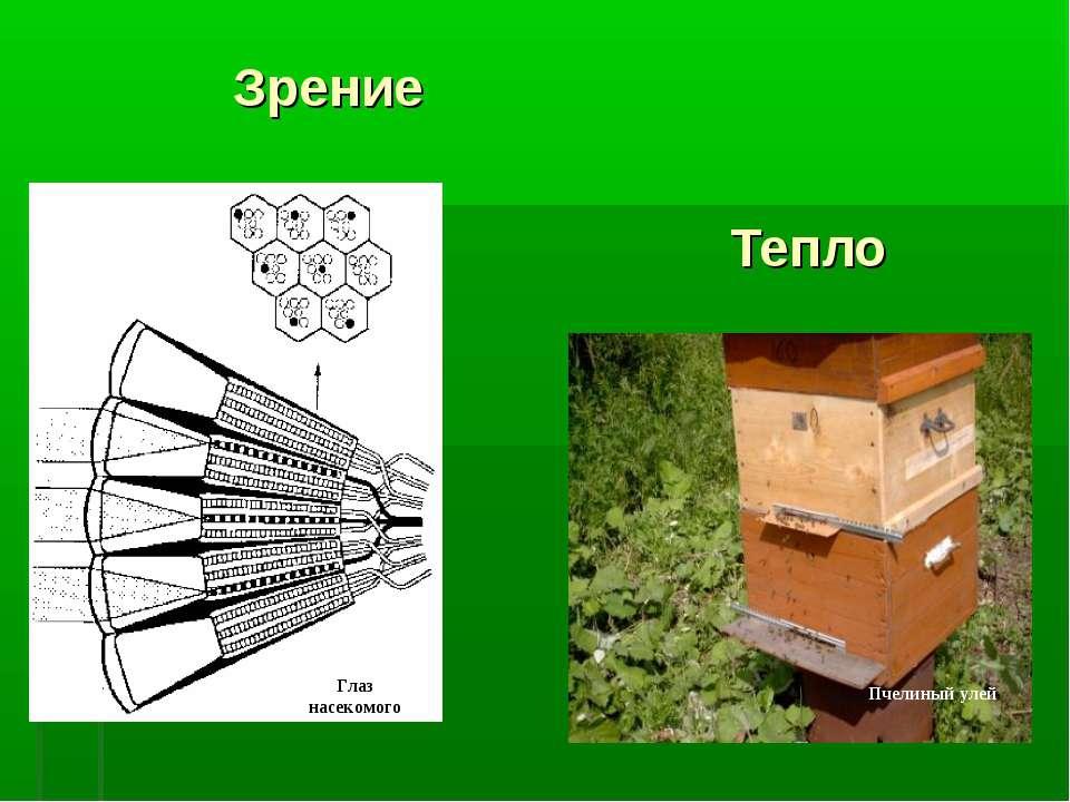 Зрение Тепло Глаз насекомого Пчелиный улей