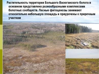 Растительность территории Большого Васюганского болота в основном представлен...