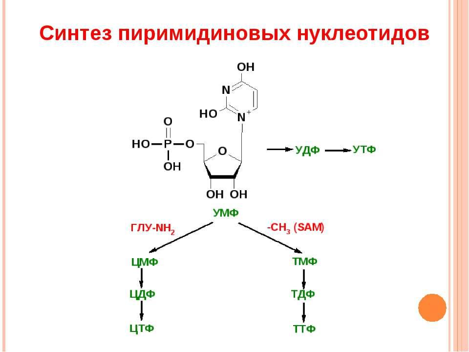 Синтез пиримидиновых нуклеотидов